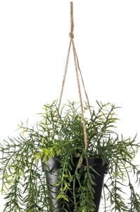 Bilde av Kunstig Asparagus i Potte 50cm