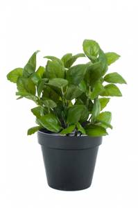 Bilde av Kunstig Basilikum Plante i Potte 28cm
