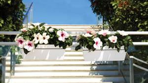 Bilde av Capri plantekasse sett til balkong Hvit 50cm