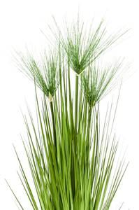 Bilde av Kunstig Cyperus Haspan 75cm