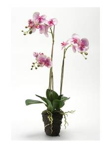 Bilde av Kunstig Orkide Fuchsa i Jord 75cm